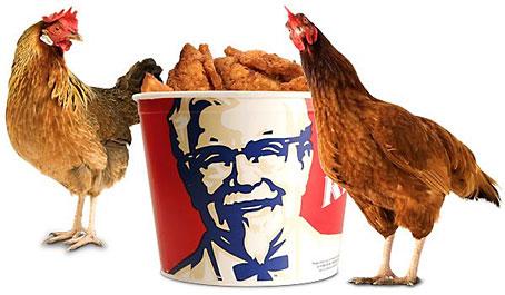 chickenbucket