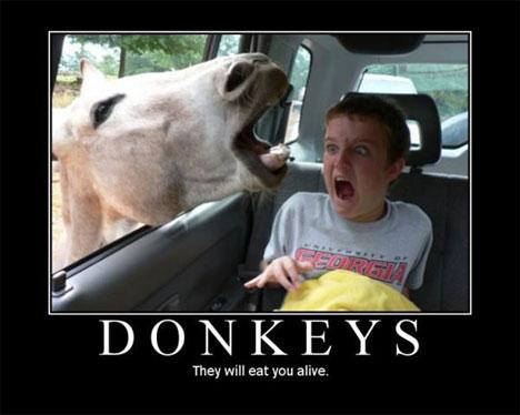 donkeyposter