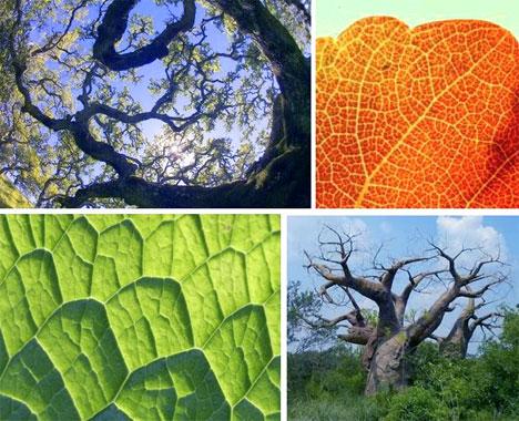leafandtreefractals